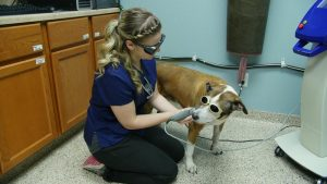 dog and cat laser therapy