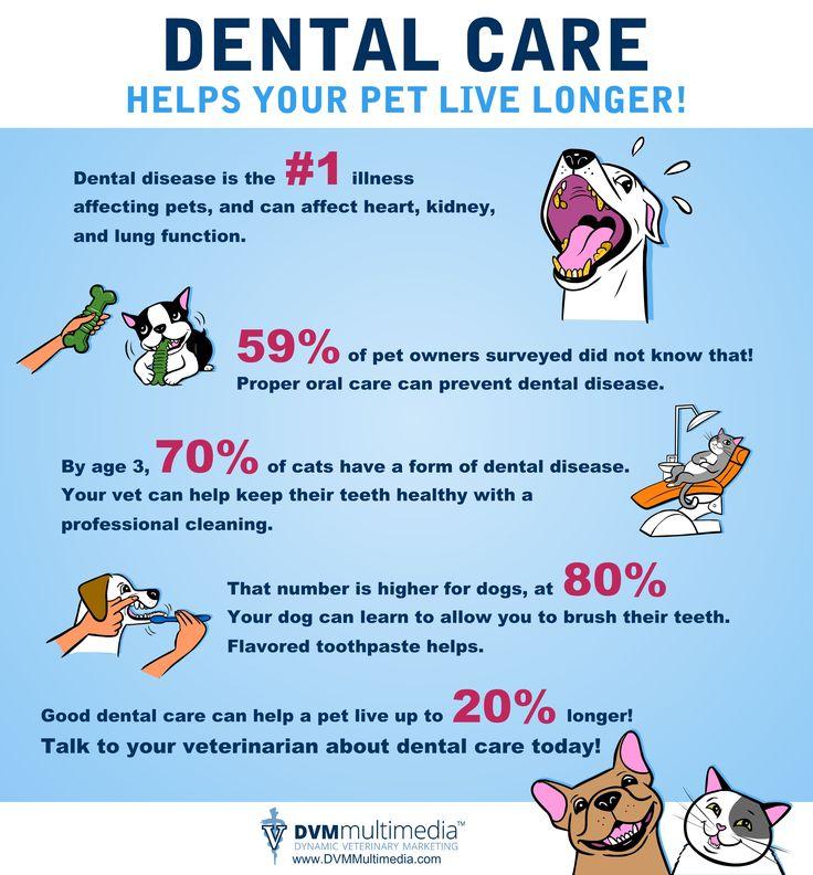 dental health cornerstone animal hospital