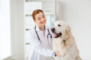 regenerative-medicine-future-cornerstone-animal-hospital