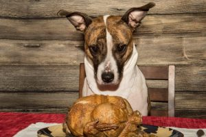 thanksgiving foods toxic pets