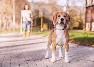 Benefits-Walking-Your-Dog