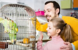 How Often Should I Clean My Bird's Cage