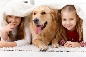 Financial Assistance veterinary services