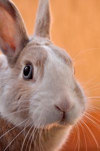 International Rabbit Day- September 26