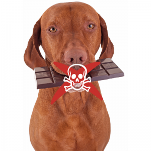 Holidays may be dangerous to your pet