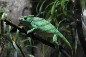 National Reptile Awareness Day – Oct 21st
