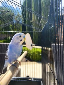 Is a pet bird for me
