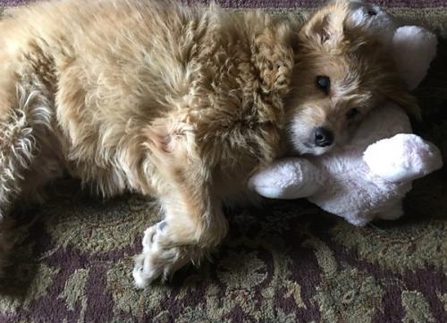 Lyon, Strret Dog from Nepal