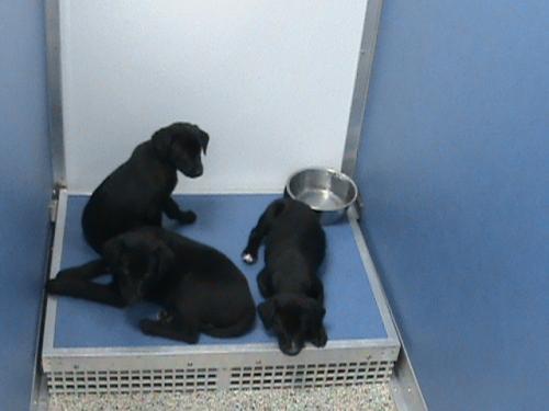 Puppies  2-1